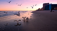 Myrtle Beach, South Carolina  Seagulls at Sunset.